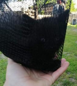 A merítőszákban lévő fekete kiscica