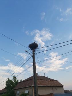 A madár visszakerült a fészkébe
