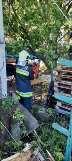 Kidőlt fa darabolása motoros láncfűrésszel